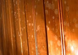 Kelalaian tidak melindungi furniture kayu dari jamur bisa membuat Anda rugi.