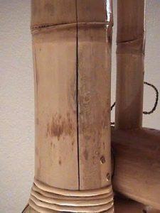 jamur pada bambu