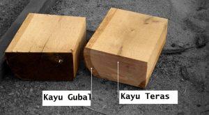 kayu teras dan kayu gubal