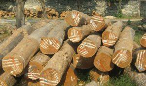 kayu yang bagus untuk furniture (2)