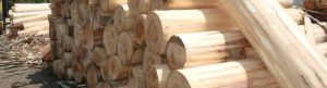 kayu yang murah untuk furniture