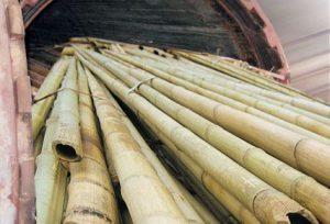 biaya pengawetan bambu (2)