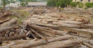 tips pengawetan kayu akasia