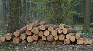 Peraturan untuk Menebang Kayu dan Bambu
