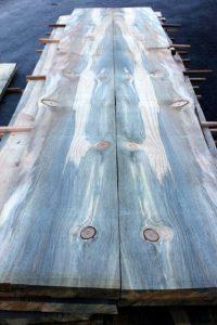 jamur-blue-stain-pada-kayu-pinus