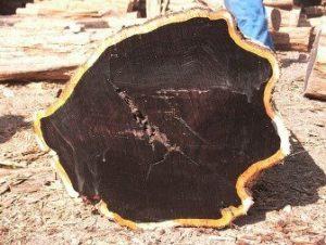kayu-ebony