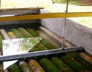 pengawetan bambu lebih sederhana
