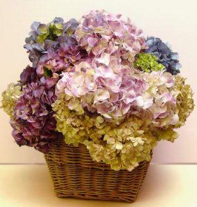 bunga-kering-2