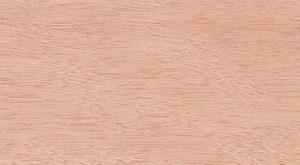 kayu-gelam