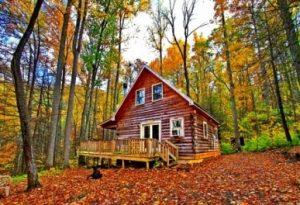 cottage kayu di tengah hutan